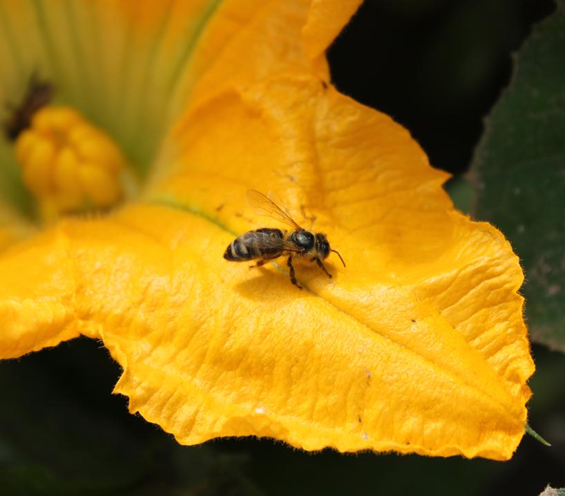 Bienen_Blueten-(8)